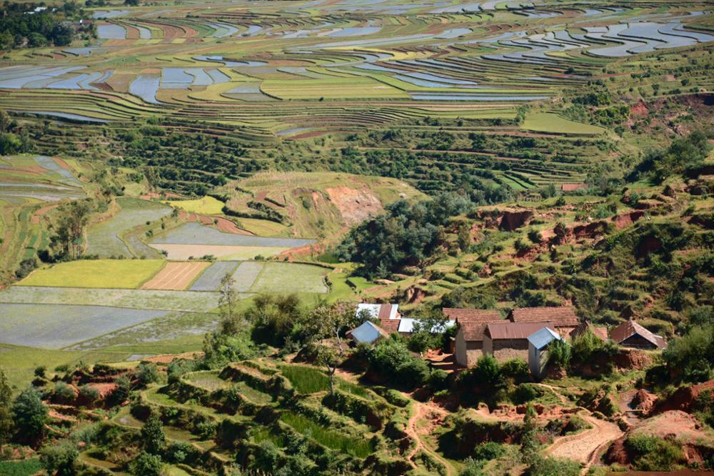 Rice/fish farming in Madagascar: a practice that should become a reference